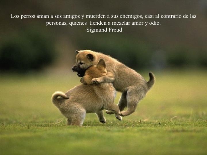 Frases sobre nuestro mejor amigo, el perro - Taringa!