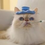 tu-gato-enfermo